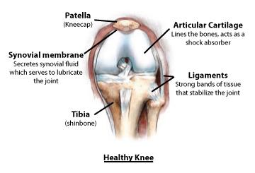 knee_healthy_diagram.jpg